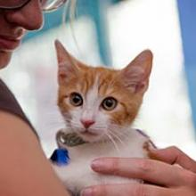 Orange kitten needs help from supporters like you.