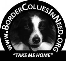 BorderColliesInNeed LOGO ADI 222W