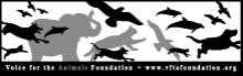 Voice for Animals logo ADI